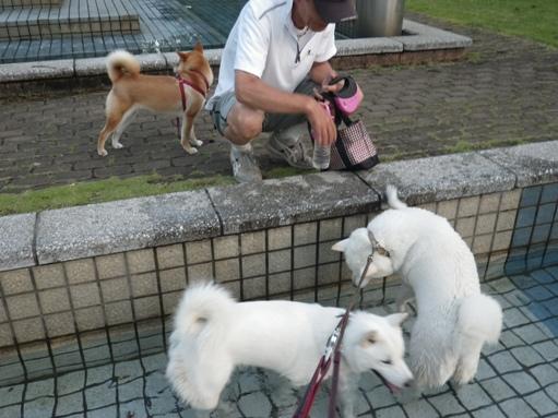 2012.7.4 三橋公園8