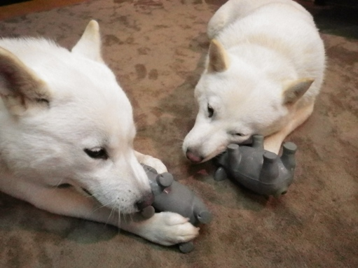 2012.7.2 ぶたのおもちゃ2