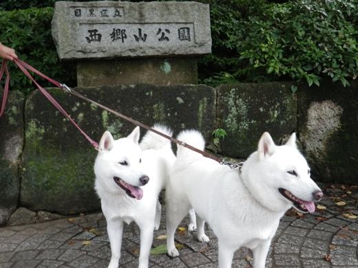 2012.7.8 西郷山公園1