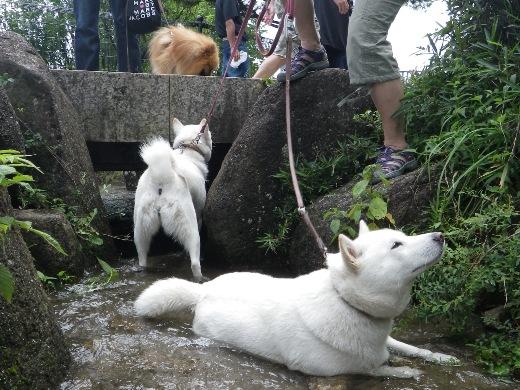 2012.7.8 西郷山公園2