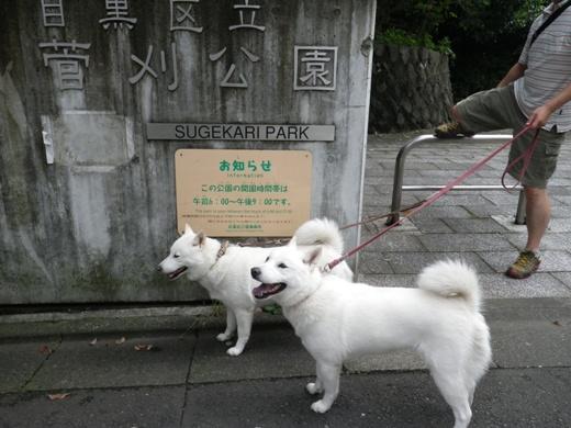 2012.7.8 菅刈公園2
