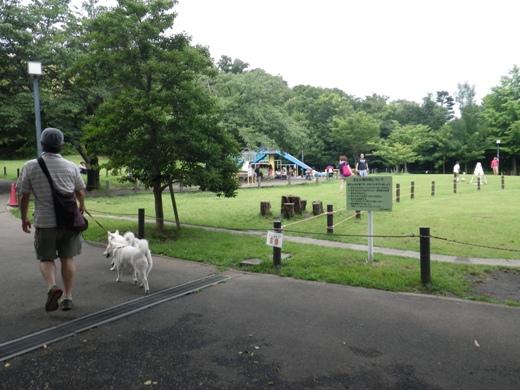 2012.7.8 菅刈公園1