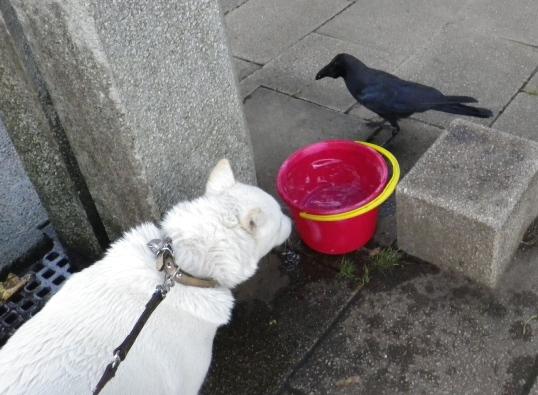 2012.7.17 公園の水飲み場で…カラスも