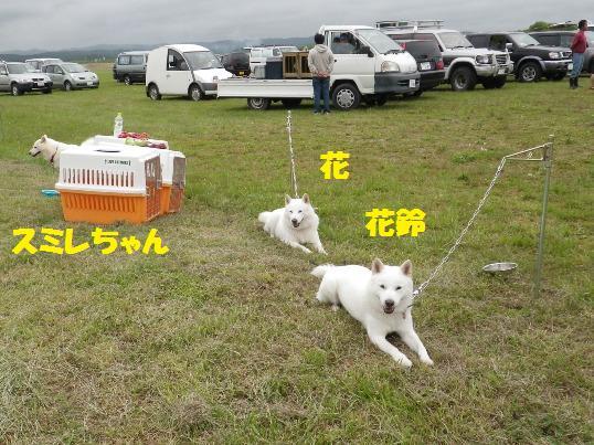 2012.7.22 くつろぐ犬たち