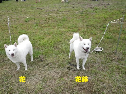 2012.7.22 花(左)&花鈴