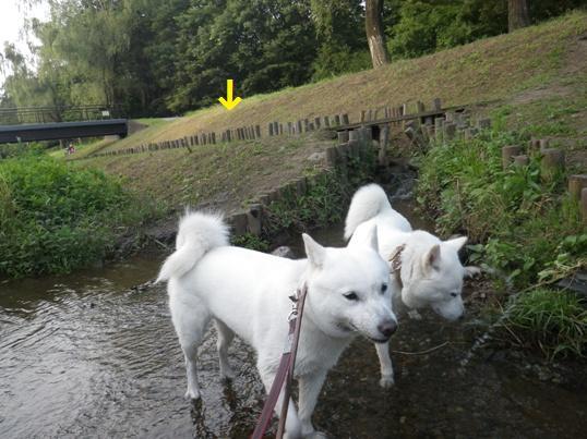 2012.7.27 野川公園3