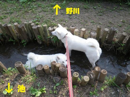 2012.7.27 野川公園1