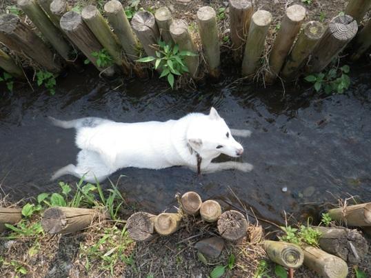 2012.7.27 野川公園2