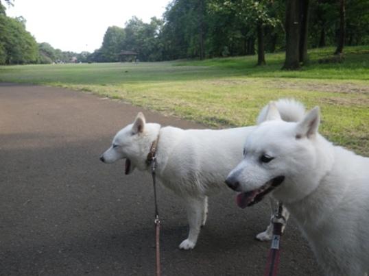 2012.7.27 野川公園4
