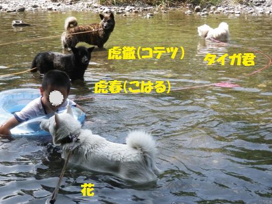 2012.7.30 巾着田7