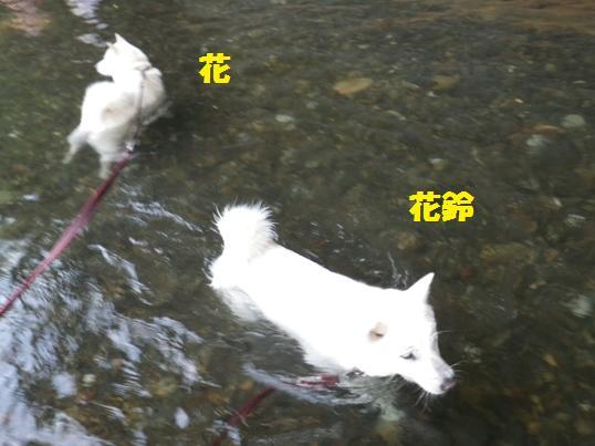 2012.7.30 巾着田・入水