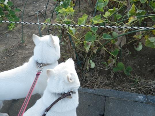 2012.8.05 ひょうたん畑にて