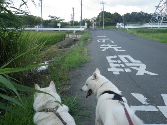 2012.8.05 お姉ちゃんを追いかけて2