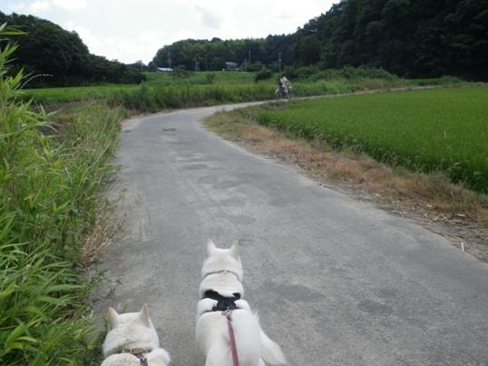 2012.8.05 お姉ちゃんを追いかけて1