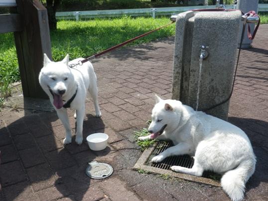 2012.8.05 公園の水飲み場で