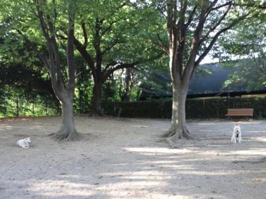 2012.8.05 守谷SA1