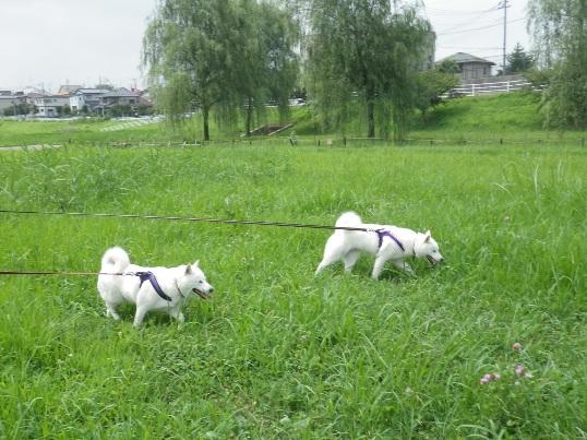 2012.8.12 みんなで散歩4