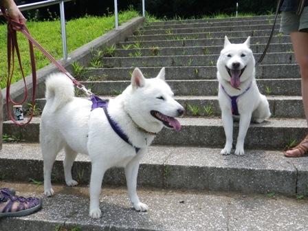 2012.8.12 みんなで散歩2