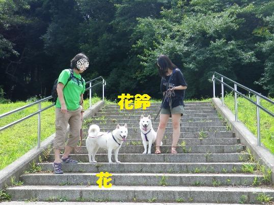 2012.8.12 みんなで散歩1