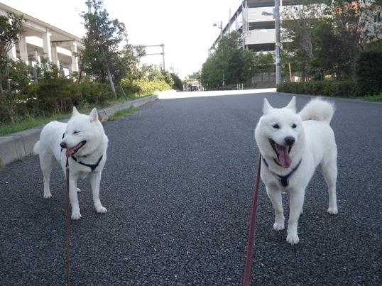2012.8.19 朝の散歩終了