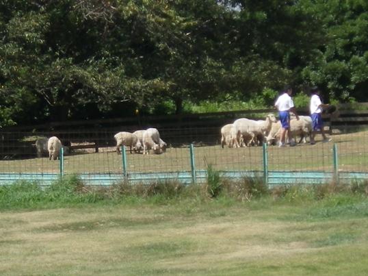 2012.8.23 ポティロンの森・羊追いショー