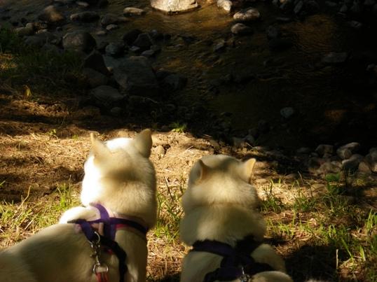 2012.8.26 甲川(かぶとがわ)2