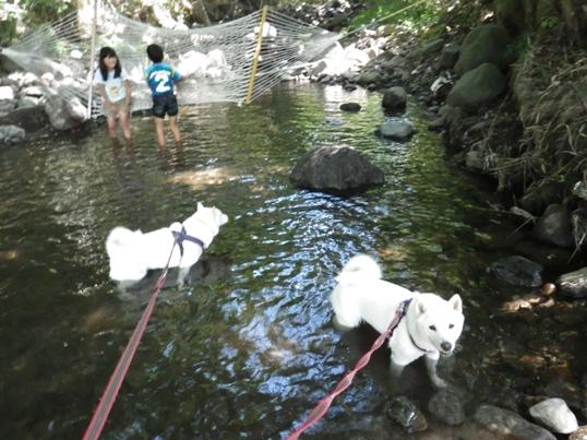 2012.8.26 甲川(かぶとがわ)1