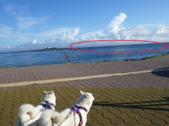 2012.9.4 コンブ漁の船を見て…