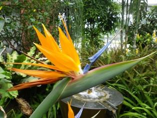 2012.9.6 鳥のような花