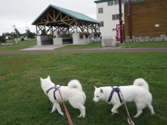 2012.9.6 しんしのつ・朝の散歩2
