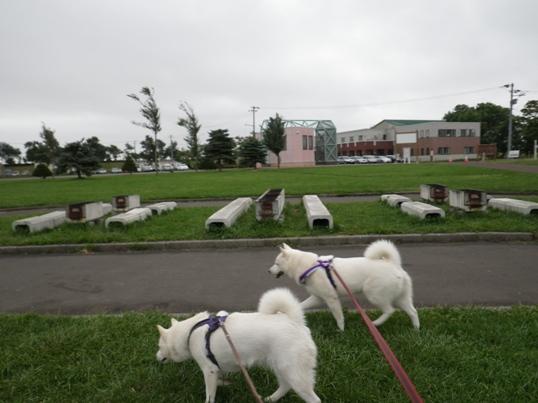 2012.9.6 しんしのつ・朝の散歩3