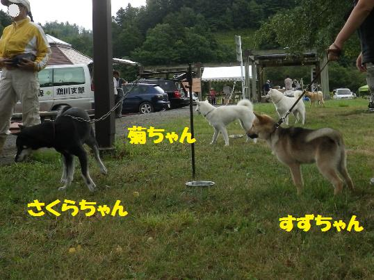 2012.9.9 紅ママさんファミリー他
