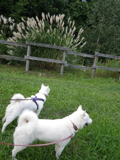 2012.9.15 平岡公園2