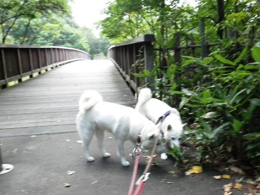 2012.9.15 平岡公園1