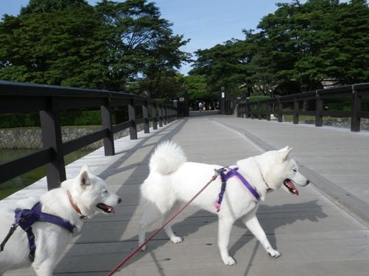 2012.9.17 五稜郭公園1