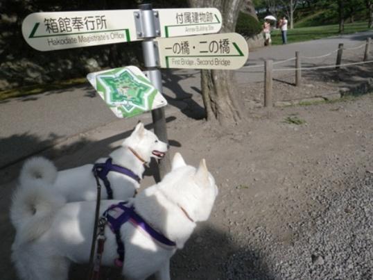 2012.9.17 五稜郭公園2