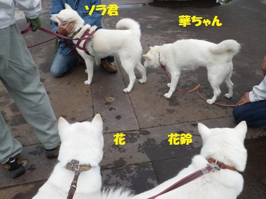 2012.10.7 ソラ君・華ちゃん