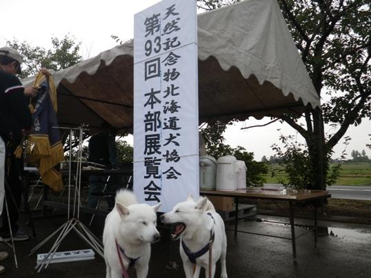 2012.10.7 協会本部展の朝