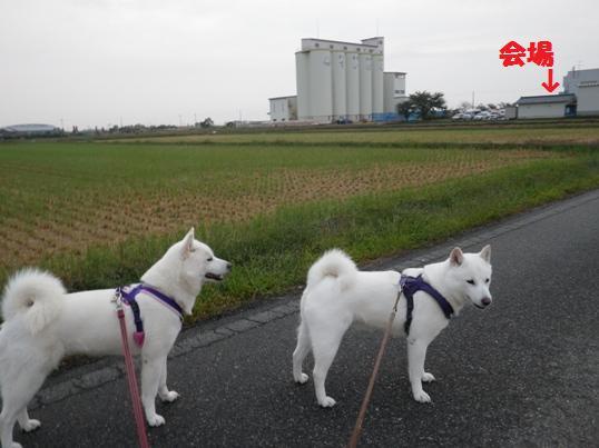 2012.10.7 朝の散歩