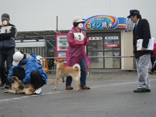 2012.10.7 仔犬牡・審査1
