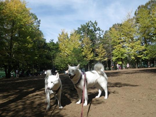 2012.10.13 今日の公園