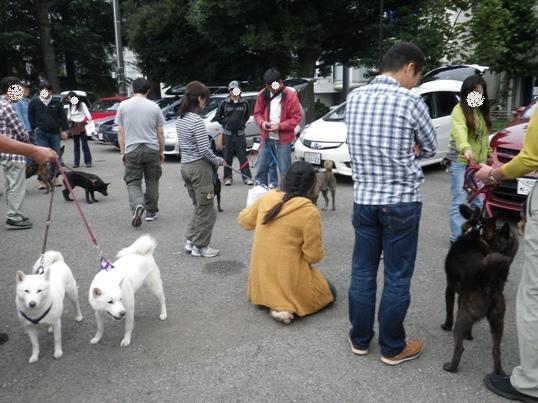 2012.10.14 甲斐犬さんがいっぱい~