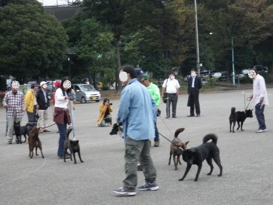 2012.10.14 甲斐犬だけで