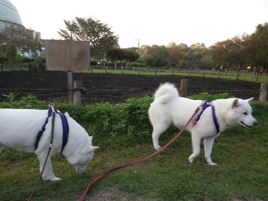 2012.10.22 芦花公園2