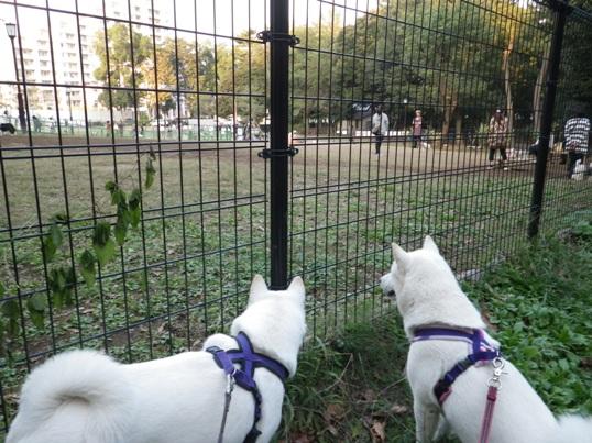 2012.10.22 芦花公園1