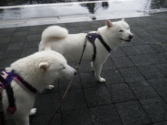 2012.10.23 雨宿り3