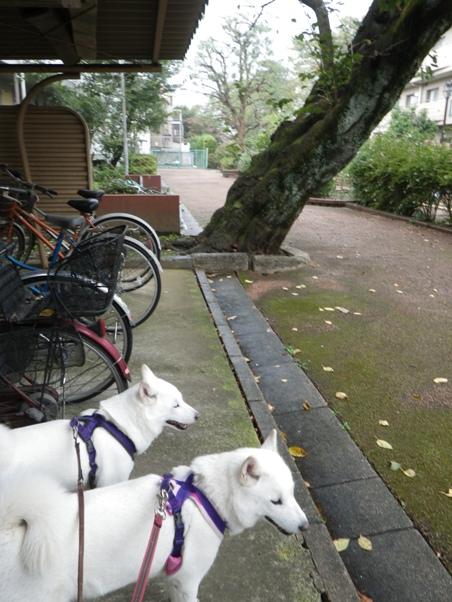 2012.10.23 雨宿り1