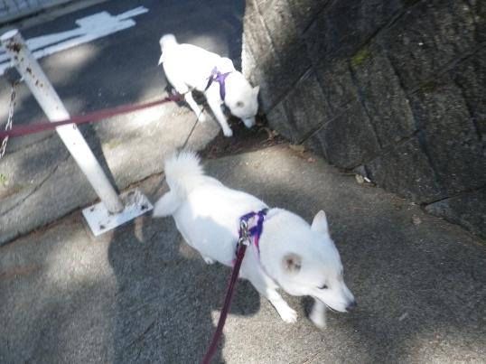 2012.10.24 歩こう4