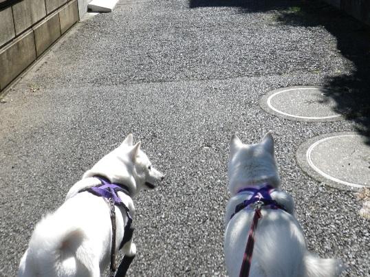2012.10.24 歩こう2
