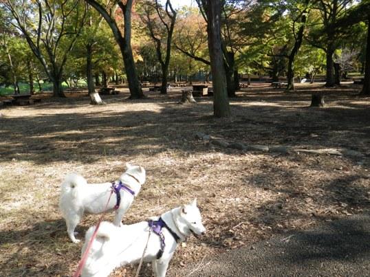 2012.11.07 武蔵野公園6